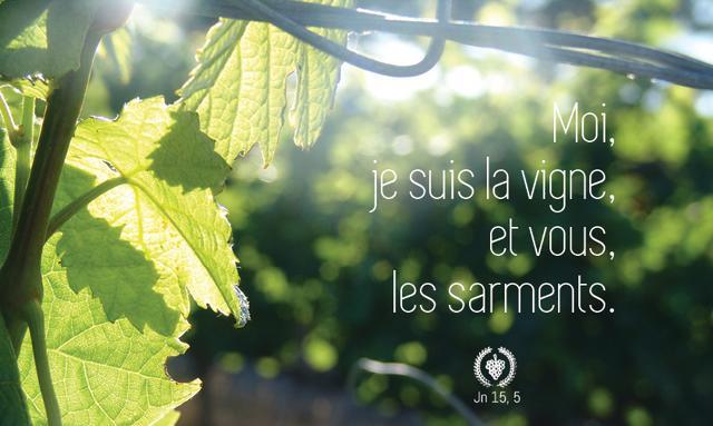 vigne et sarments